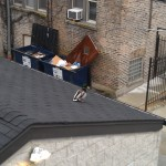 Image of a Mallard on a Garage Rooftop